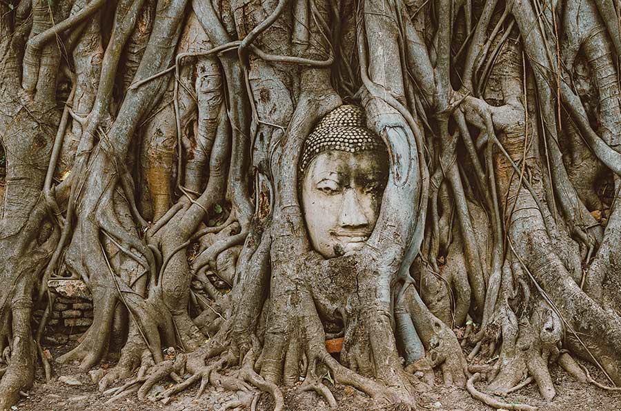 buddha head tree ayutthaya