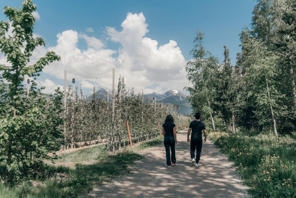 Alto Adige Sud Tirolo walk