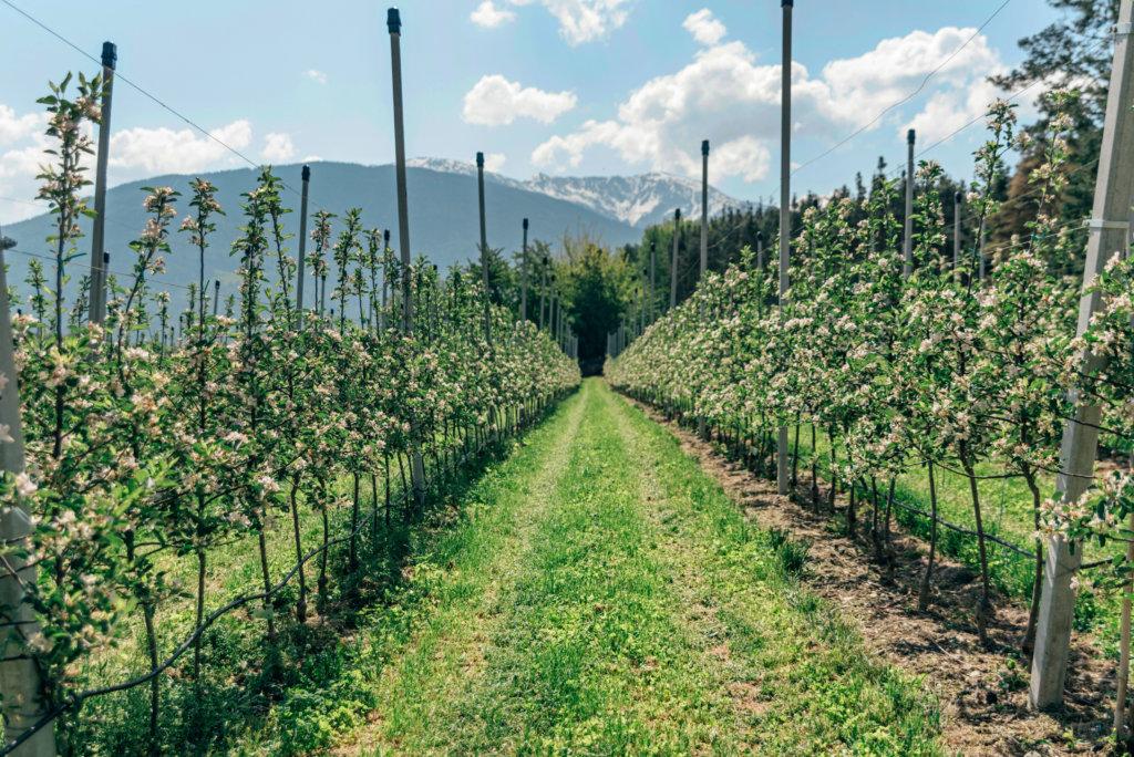 Alto Adige Sud Tirolo apples seehof