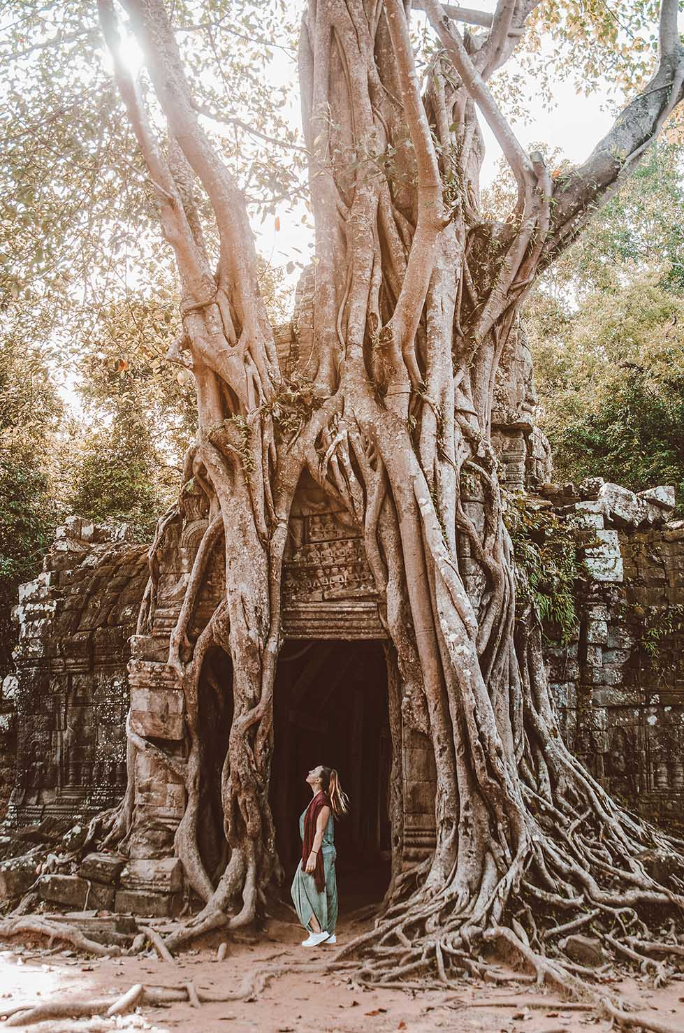 angkor wat tree temple